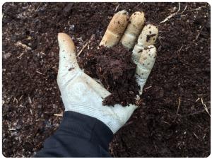 堆肥の写真